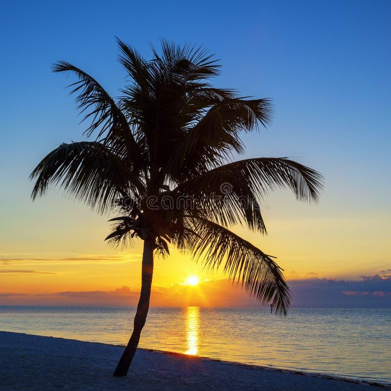 Vista da praia com a palmeira no por do sol fotografia de stock