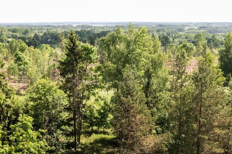 Vista da torre alta da vista à natureza verde de Letónia fotografia de stock royalty free