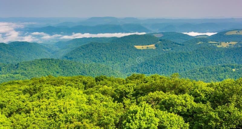 Vista da torre de observação de Olson, floresta nacional de Monongahela, fotografia de stock