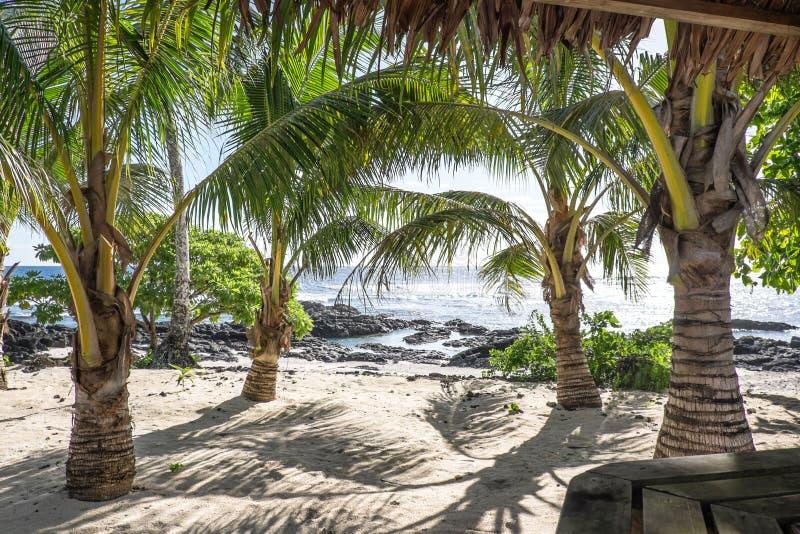 Vista da una barra tropicale sulla spiaggia sabbiosa e rocciosa con la palma TR fotografia stock libera da diritti