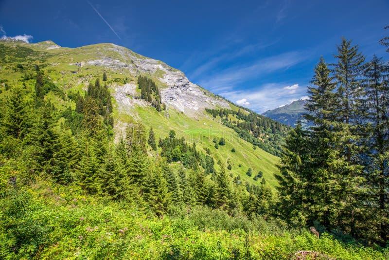 Vista da vila do olmo e de montanhas suíças - Piz Segnas, Piz Sardona, Laaxer Stockli de Ampachli, Glarus, Suíça, Europa fotos de stock royalty free