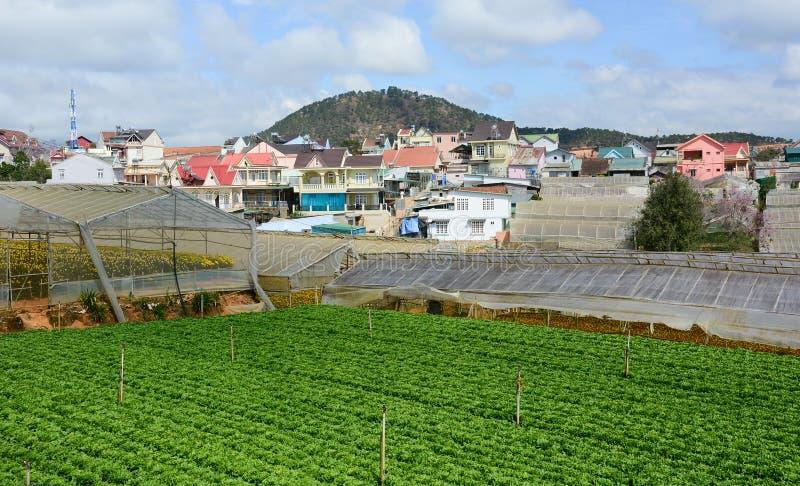 Vista da vila tailandesa de Phien com campo vegetal em montanhas de Dalat, Vietname foto de stock