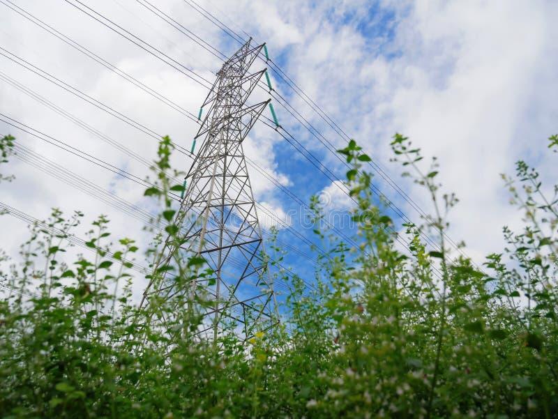 Vista dai cespugli verdi della torre e delle linee elettriche ad alta tensione contro il cielo nuvoloso blu immagini stock libere da diritti
