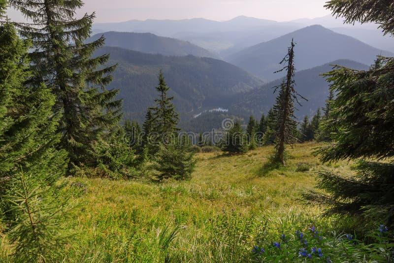 Vista dal lago Synevir della montagna in montagne carpatiche fotografie stock
