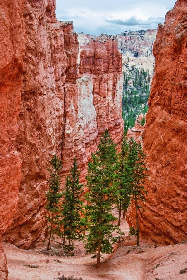 Vista dal punto di vista di Bryce Canyon. L'Utah. U.S.A. immagine stock