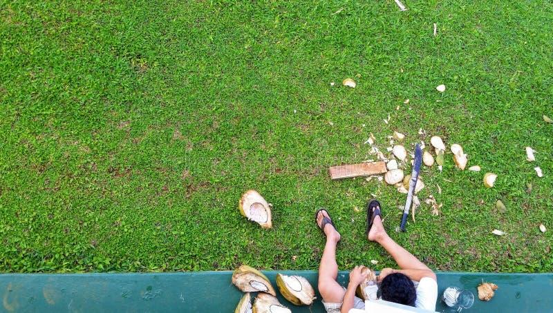 Vista Dall'Alto Su Un Balcone Che Guarda Un Uomo Scricchiolare Di Coconati A Kauai, Hawaii fotografie stock libere da diritti