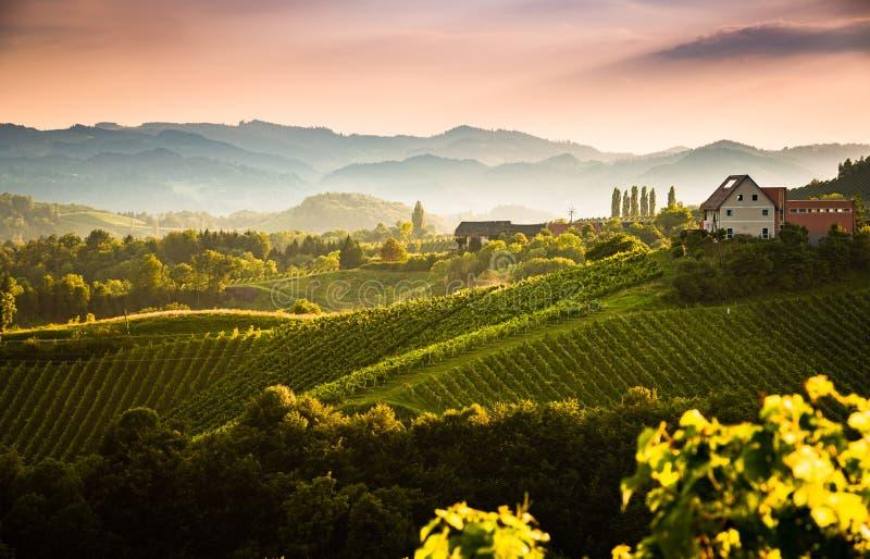 Vista dalla via famosa del vino nel sud Stiria, Austria sulla Toscana come le colline della vigna fotografie stock libere da diritti