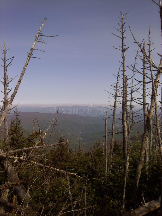 Vista das árvores da parte superior da montanha foto de stock