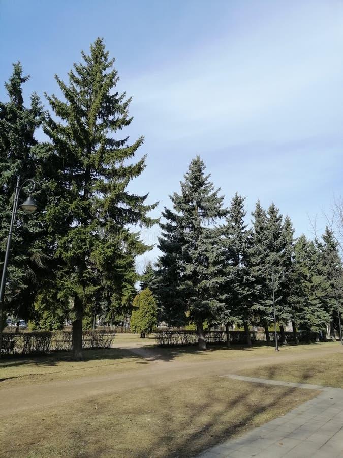 Vista das árvores e do trajeto no parque fotografia de stock royalty free