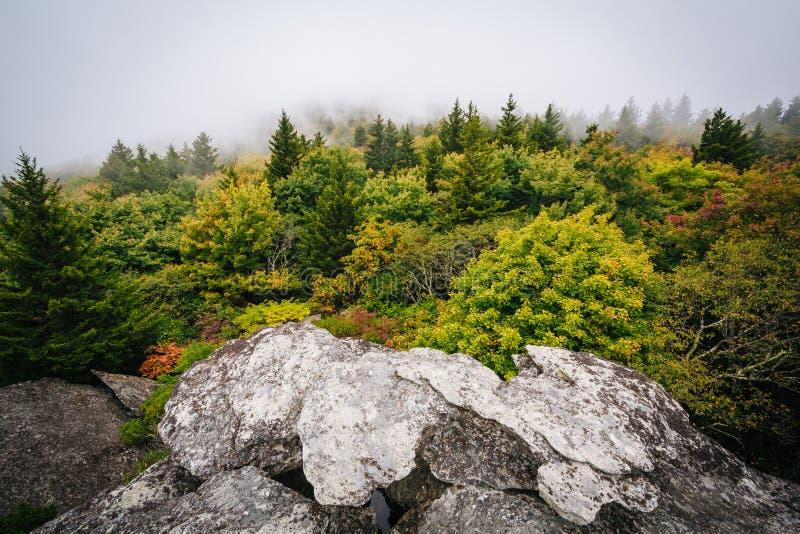 Vista das árvores na névoa da rocha preta, na montanha de primeira geração, i imagens de stock
