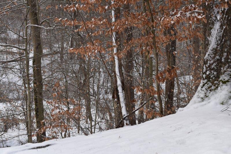 Vista das florestas de montes hocking fotografia de stock