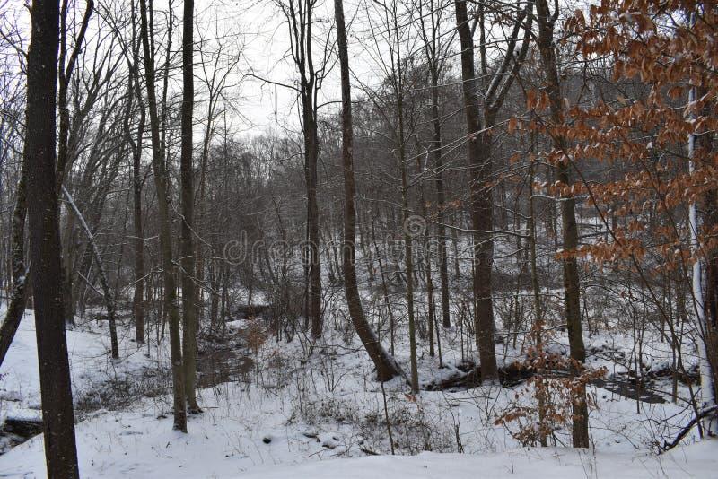 Vista das florestas de montes hocking fotografia de stock royalty free