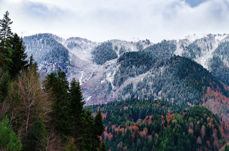 A vista das montanhas com pinhos cobertos de neve e o outono coloriram árvores fotos de stock royalty free