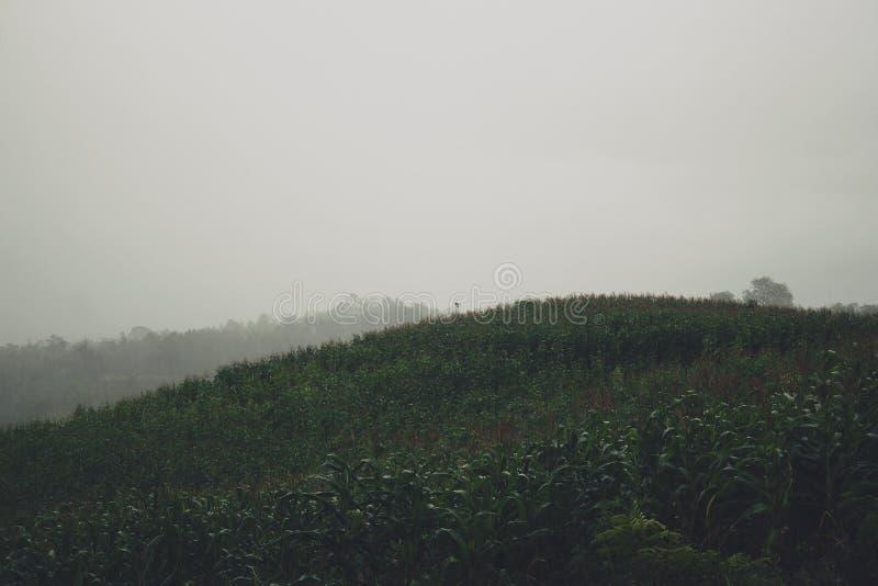 Vista das montanhas em Gunungkidul Indonésia fotos de stock royalty free