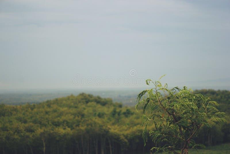 Vista das montanhas em Gunungkidul Indonésia fotos de stock