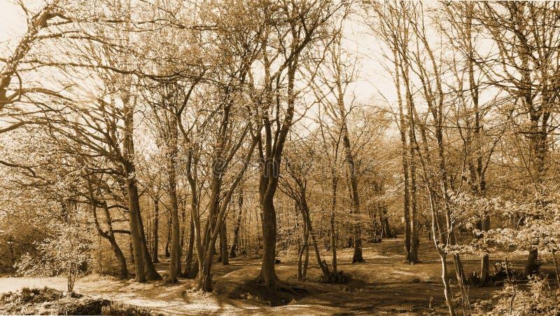 Vista de árbol - marrón fotografía de archivo libre de regalías