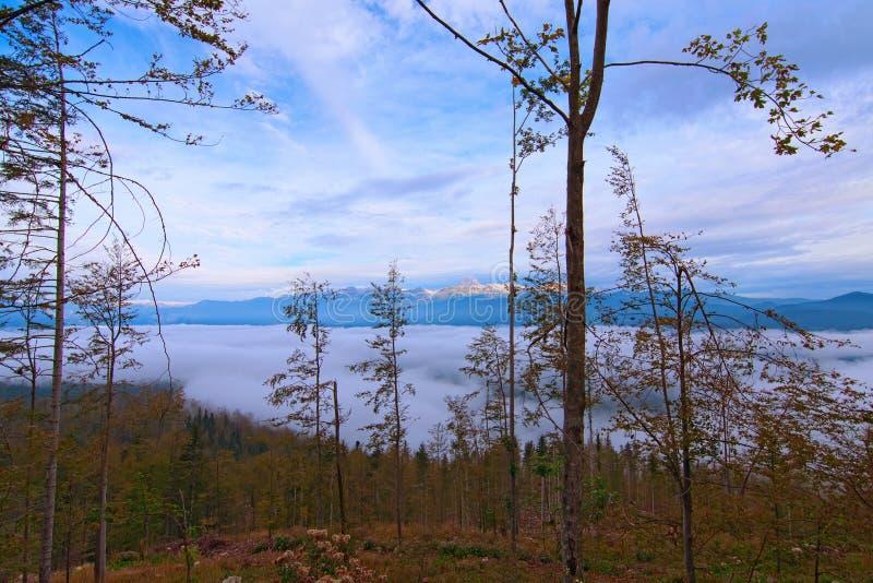 Vista de alta perspectiva de la selva nublada Amazing cordillera en el fondo Paisaje soleado del otoño, Eslovenia foto de archivo libre de regalías