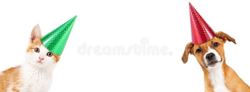 Vista de assento do gatinho alaranjado e branco para a frente fotografia de stock