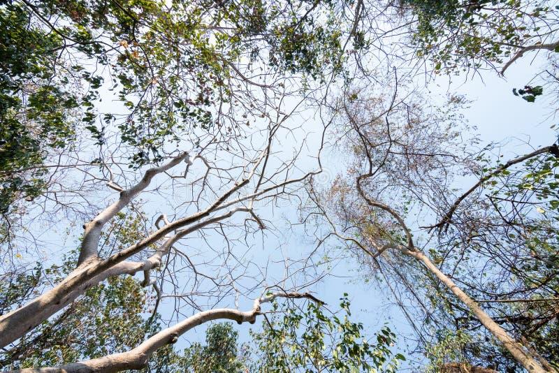 Vista de baixo ângulo da árvore tropical do outono com folhas secas na floresta foto de stock royalty free