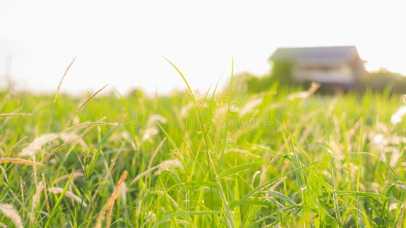 Vista de baixo ângulo desfocada abstrata do campo de grama verde com uma casa ao fundo fotografia de stock