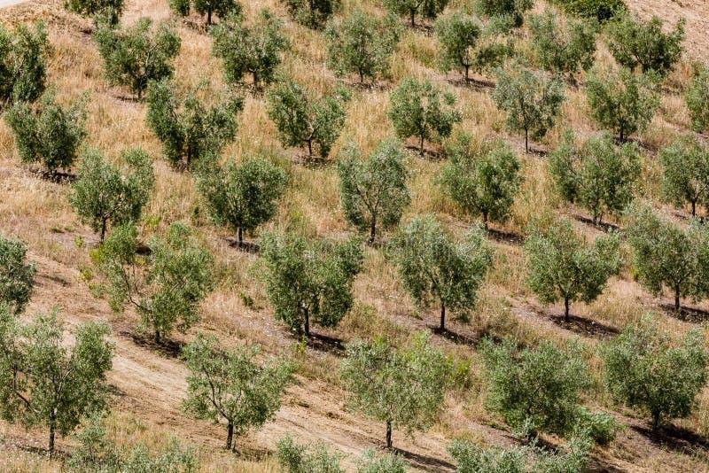 Vista de campos e de montes de tuscan na região de Maremma em Itália foto de stock