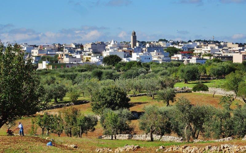Vista de Casalini, campo com oliveiras fotografia de stock royalty free