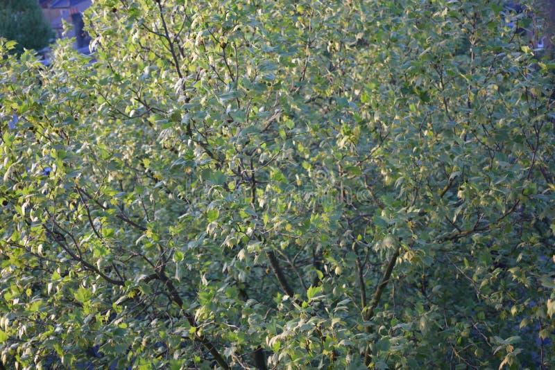 Vista de cima de uma árvore imagens de stock royalty free