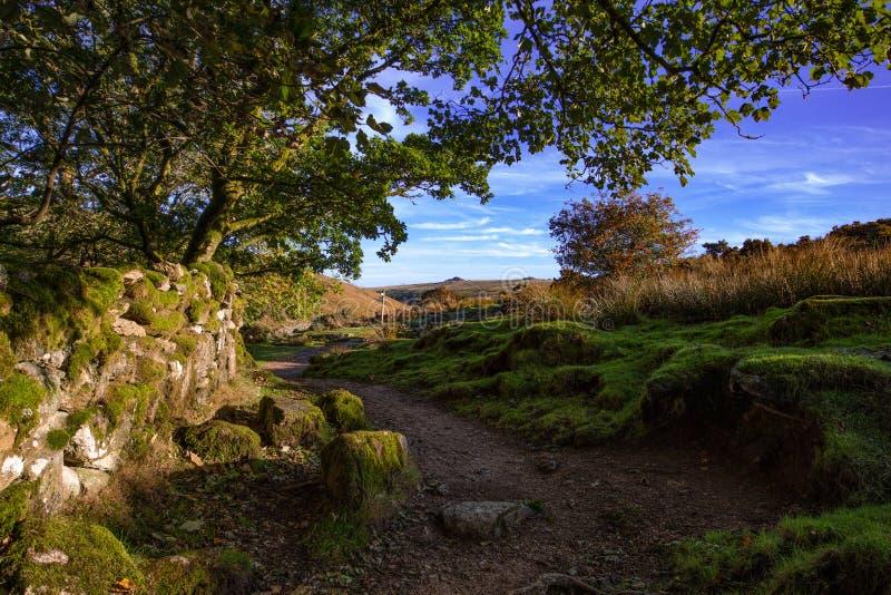 Vista de Dartmoor de la trayectoria a la madera de Wistmans fotografía de archivo libre de regalías