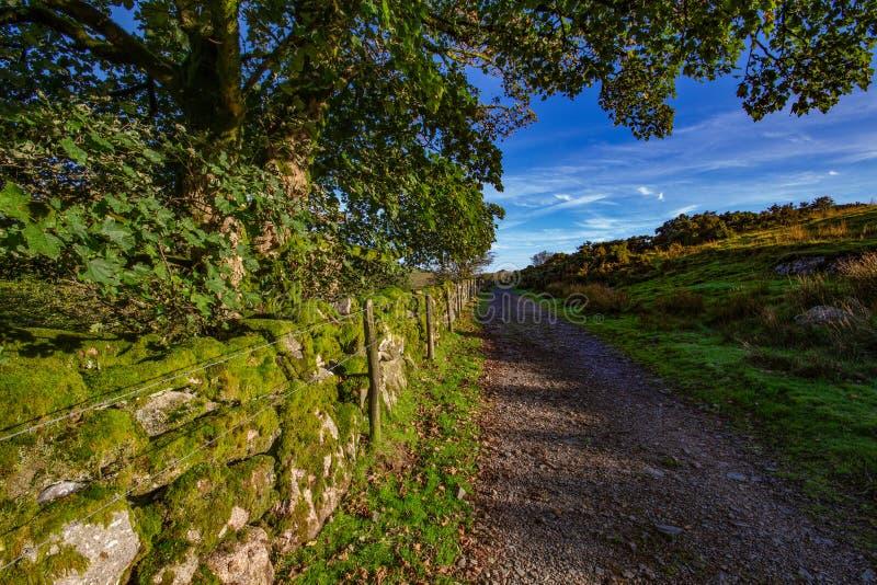 Vista de Dartmoor de la trayectoria a la madera de Wistmans fotografía de archivo