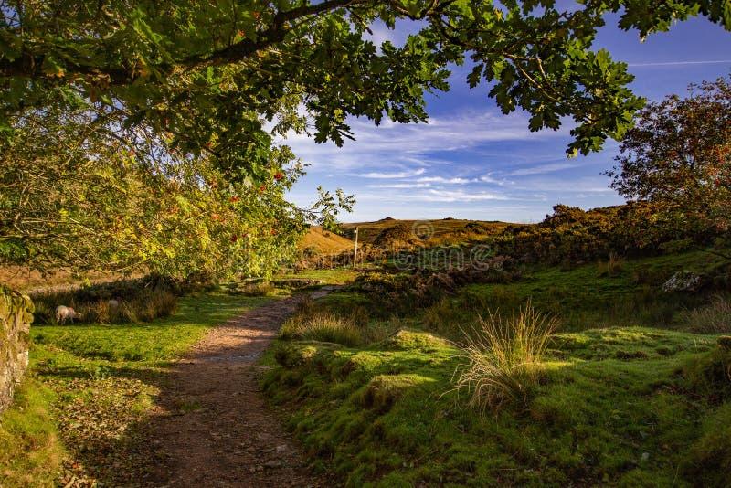 Vista de Dartmoor de la trayectoria a la madera de Wistmans imágenes de archivo libres de regalías