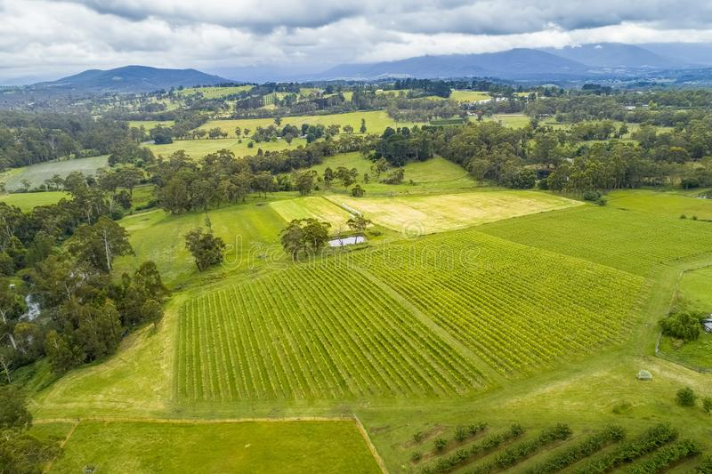 Vista de filas rectas de cosechas y del paisaje rodante foto de archivo libre de regalías