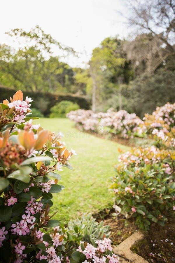 Vista de flores imagenes de archivo