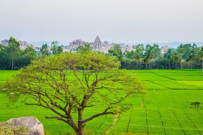 A vista de Hampi com arroz coloca, Índia imagens de stock royalty free