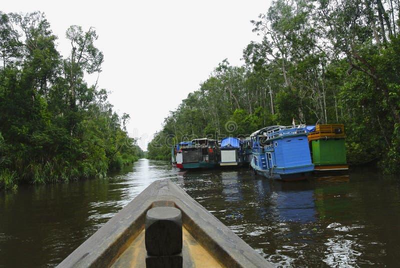 Vista de Klotok no rio de Sekonyer em Indonésia foto de stock