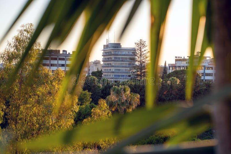 Vista de la ciudad, edificio alto a través de las hojas verdes de palmeras, fotografía de archivo libre de regalías