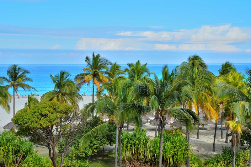 Vista de la costa atlántica de la altura, de las palmeras y de la vegetación, playa, parasoles de playa, estatuillas de la gente  foto de archivo