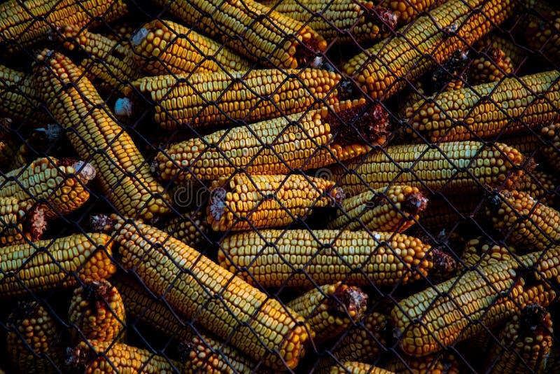 Vista de la mazorca de maíz en una caja con avaricia metálica imágenes de archivo libres de regalías