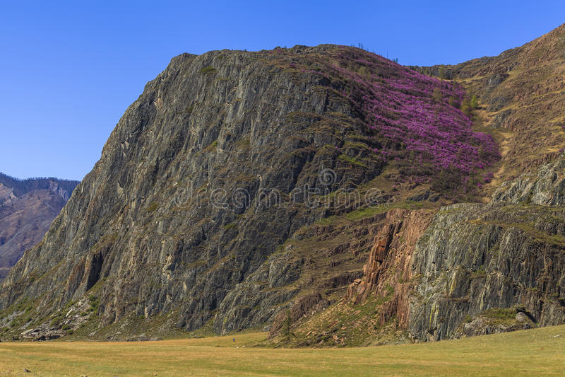Vista de la montaña demasiado grande para su edad con los arbustos del rododendro imagen de archivo libre de regalías