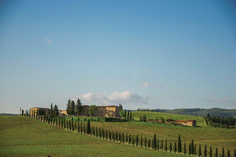 Vista de la opinión de los viñedos de viñedos y de la colina con el chalet en colina del th con el chalet en el top, en la puesta fotografía de archivo libre de regalías