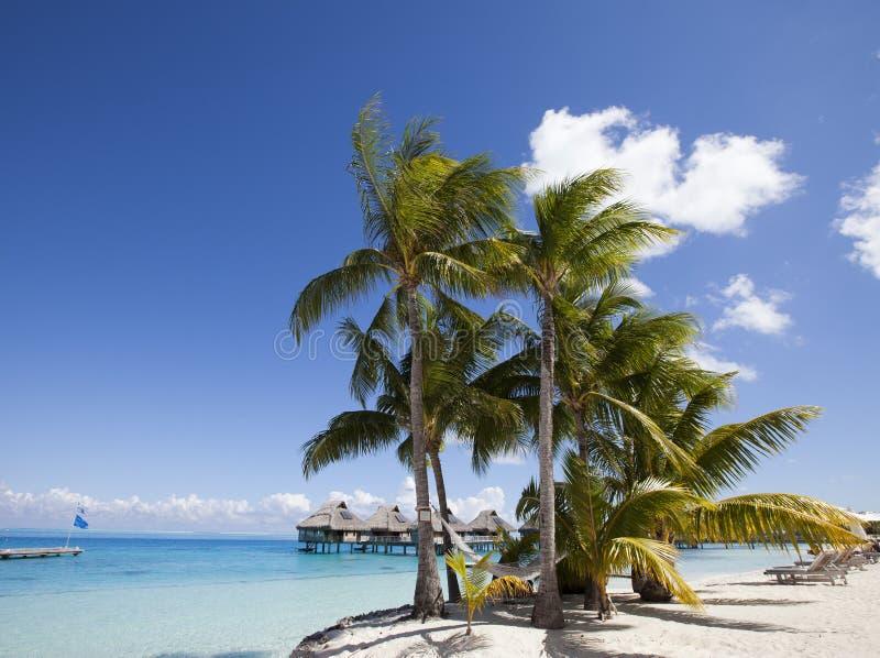 Vista de la playa de arena con palmeras y hamacas, Bora Bora, Polinesia Francesa imagenes de archivo