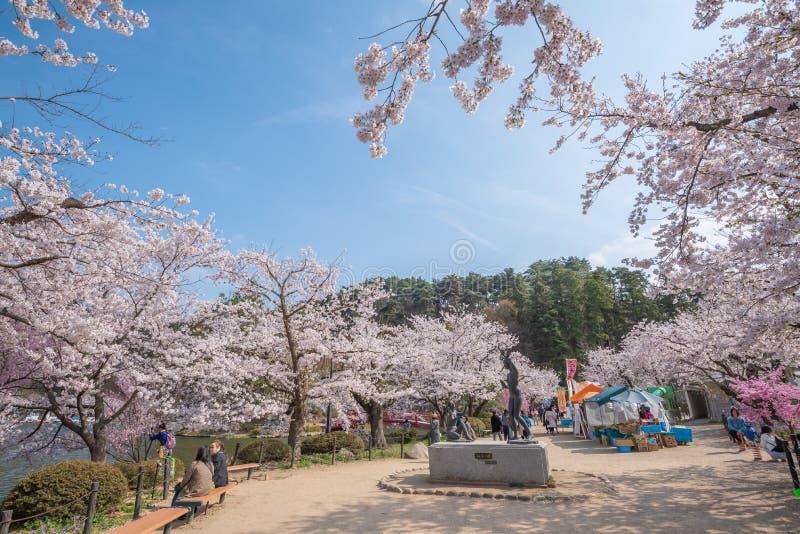 Vista de la plena floración de la flor de cerezo en el parque de Garyu, Nagano fotos de archivo libres de regalías