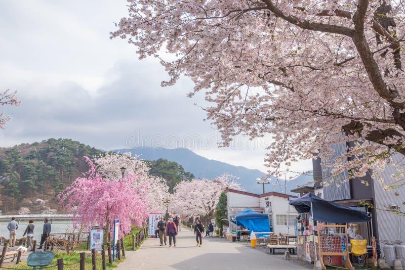 Vista de la plena floración de la flor de cerezo en el parque de Garyu, Nagano fotografía de archivo libre de regalías