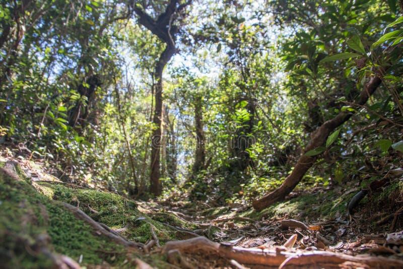 Vista de la selva tropical en Malasia de la perspectiva de la rana foto de archivo
