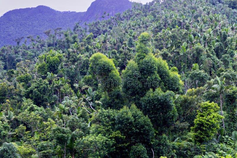 Vista de la selva tropical imagen de archivo libre de regalías