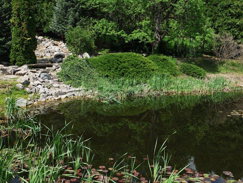Vista de la vegetación de la primavera alrededor de la charca decorativa del jardín con la cascada artificial secada hecha de roc imagen de archivo libre de regalías