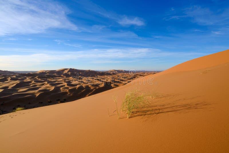 Vista de las dunas de Chebbi del ergio - Sahara Desert imagen de archivo