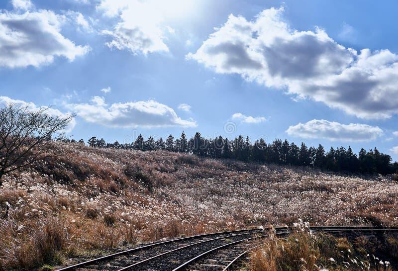 Vista de las pistas de ferrocarril que pasan a través de un campo de la hierba de plata en un día soleado en la isla de Jeju, Cor imágenes de archivo libres de regalías