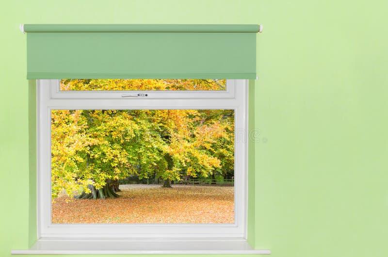 Vista de los árboles del otoño fotografía de archivo libre de regalías
