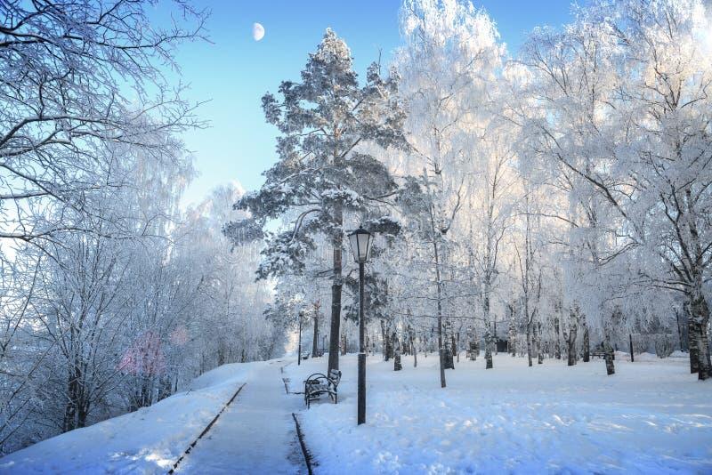 Vista de los árboles nevosos y de la luna en el cielo claro imagenes de archivo