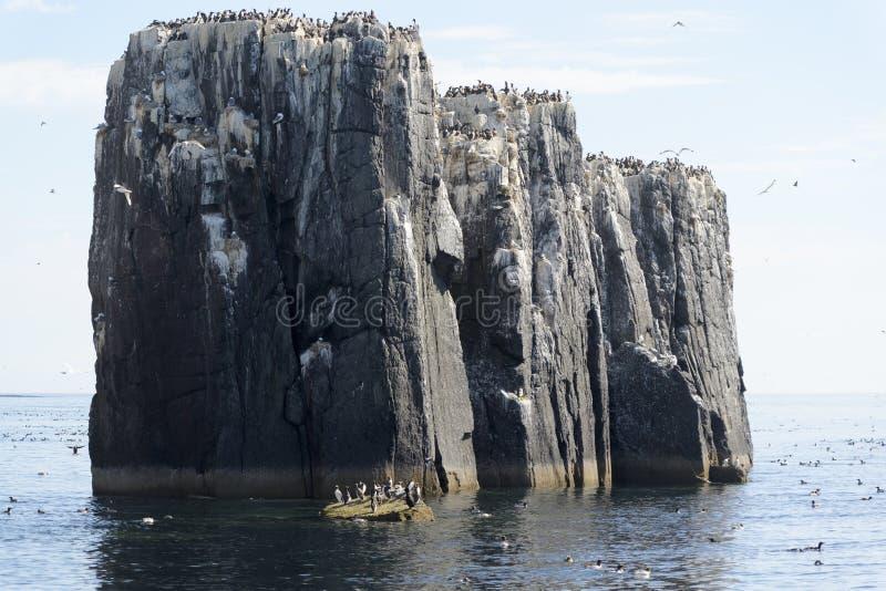 Vista de los acantilados del mar con la jerarquización de las aves marinas foto de archivo